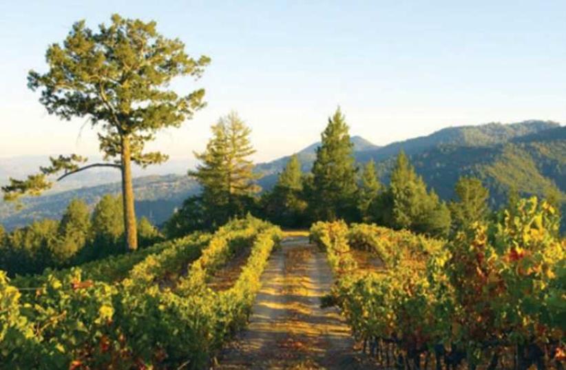 Psagot Winery (photo credit: Courtesy)
