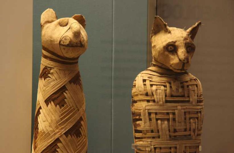 Egypt mummies of animals (photo credit: Wikimedia Commons)