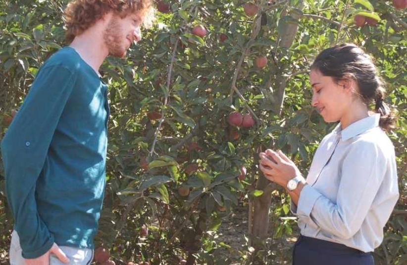 'Apples in the Desert' movie (photo credit: PR)