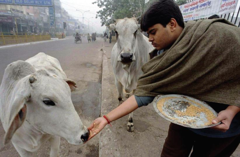 Sacred cows (photo credit: KAMAL KISHORE/REUTERS)