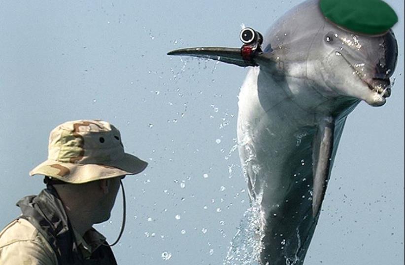 A military dolphin (illustrative) (photo credit: Wikimedia Commons,JPOST STAFF)