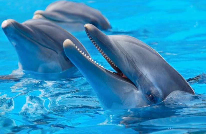 Dolphins [Illustrative] (photo credit: INGIMAGE)