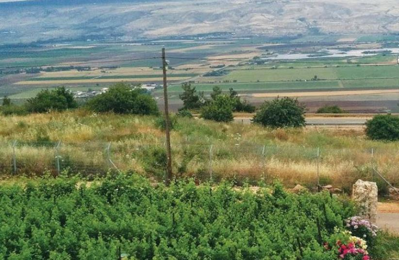 The lush Kedesh Valley terrain where the Na'aman Winery is based (photo credit: NA'AMAN WINERY)