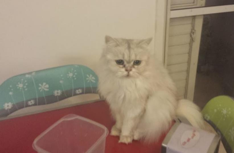 Sad cat (photo credit: NATI GABBAY)