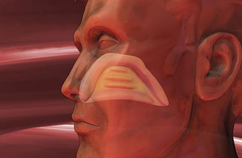 Ear, nose, and throat (Illustration) (photo credit: TNS)