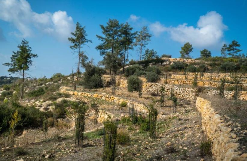 The newly-restored 2,000-year-old terraces in the Carmel forest (photo credit: Courtesy)