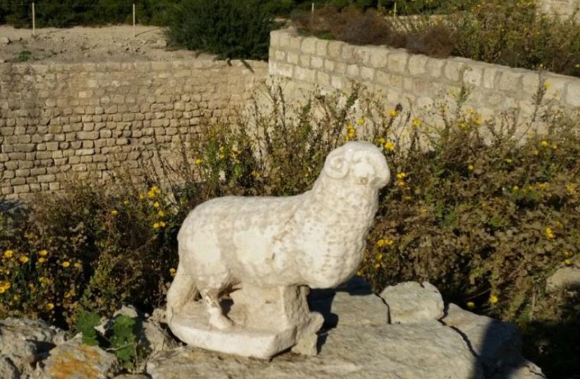 Byzantine era statue of lamb found in Caesarea (photo credit: VERED SARIG)