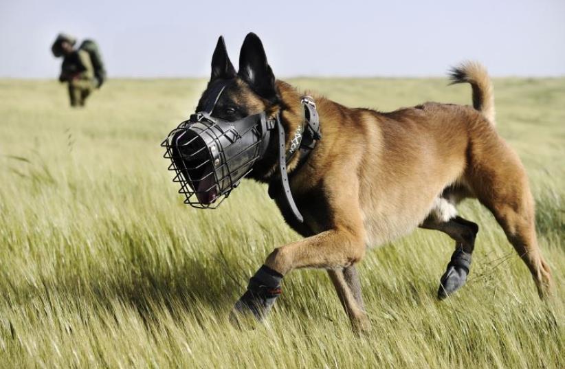 IDF search dog serving in the Oketz unit (photo credit: IDF SPOKESPERSON'S UNIT)