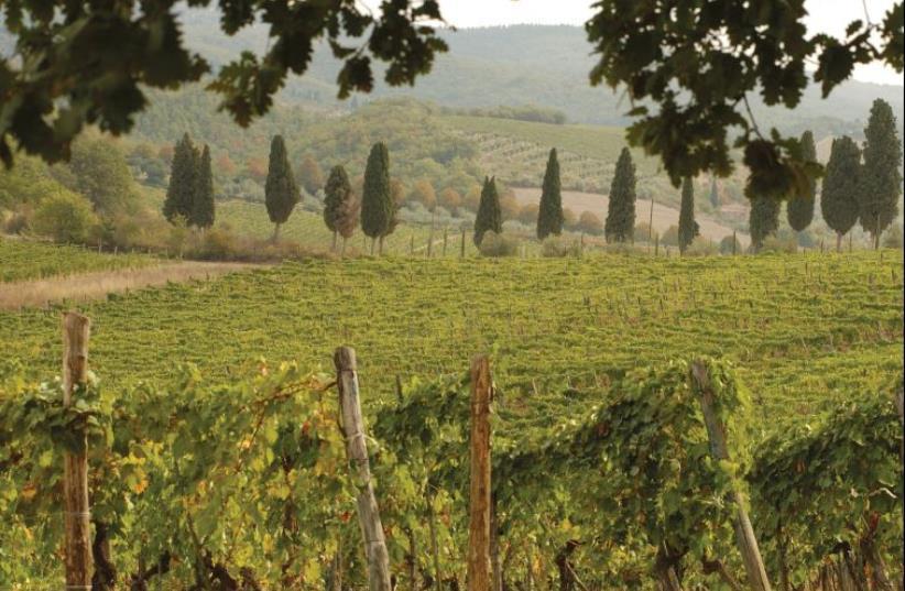 Tuscany  (photo credit: INGIMAGE)