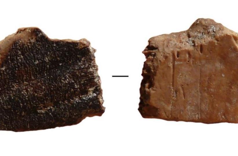 Burn marks on a prehistoric tortoise bone found in Quesem Cave, outside of Tel Aviv (photo credit: DR. RUTH BLASCO)