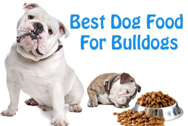 Best Dog Food For Bulldogs What Every Dog Owner Should Know The Jerusalem Post