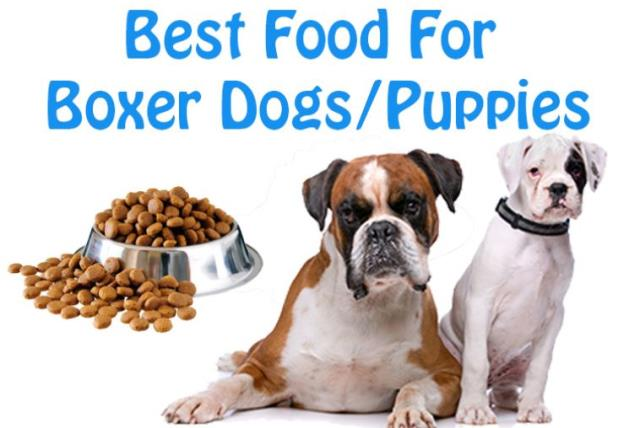 Dog Lovers Know The Best Dog Foods For Boxer Breed Dogs Puppies The Jerusalem Post