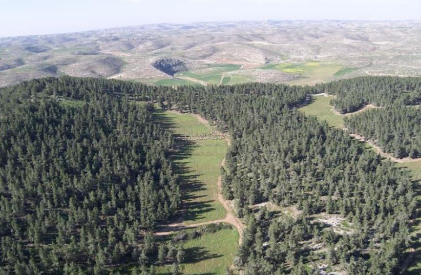Yatir Forest in the northern Negev (photo credit: KKL-JNF ARCHIVE)