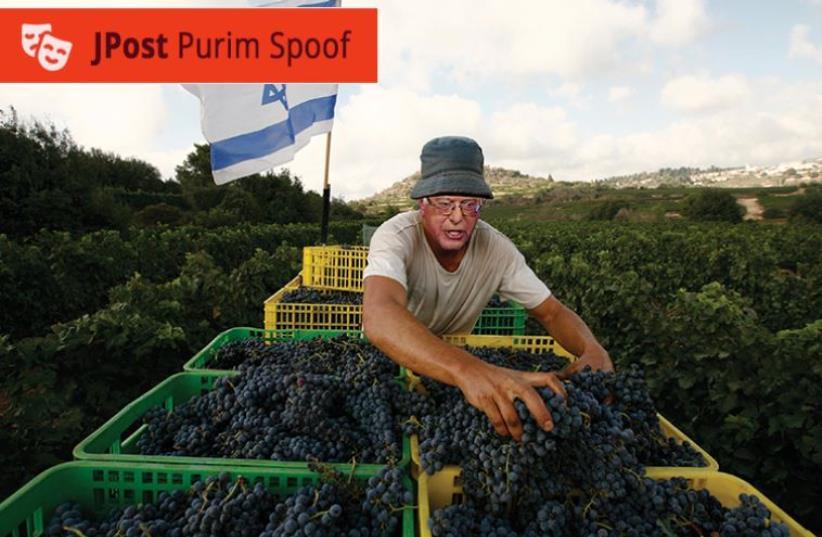 Bernie Sanders finds work gratifying on the kibbutz that has re-adopted him (photo credit: JROAST STAFF)