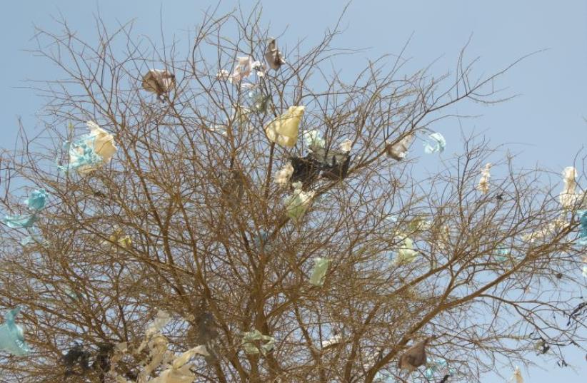 Plastic Bags in Bare Tree [illustrative] (photo credit: INGIMAGE)