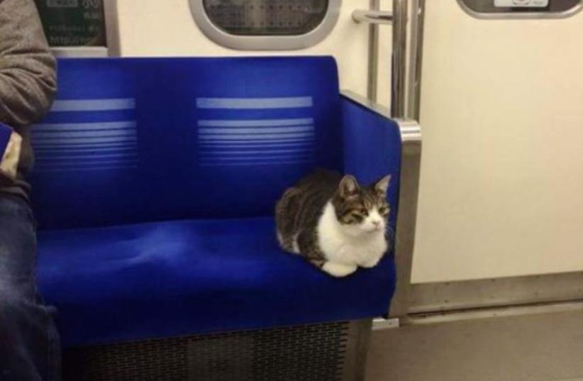Cat on Tokyo train (photo credit: MANPUKUOYA)