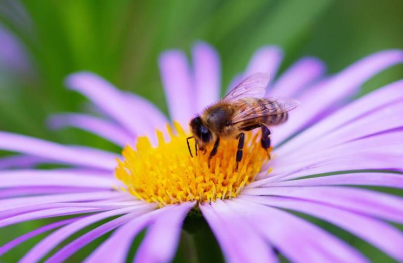 Bee [Illustrative] (photo credit: INGIMAGE)