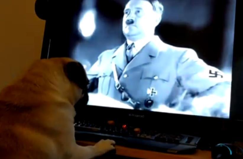 Scottish man teaches pug how to make Nazi salute (photo credit: YOUTUBE SCREENSHOT)