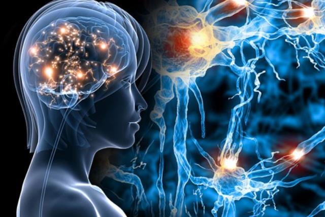 Oweli Neuro Review