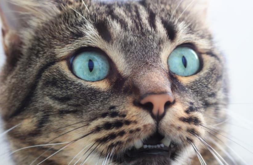 Photo illustration of cat (photo credit: INGIMAGE)