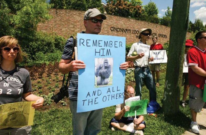 Gorilla protest (photo credit: REUTERS)