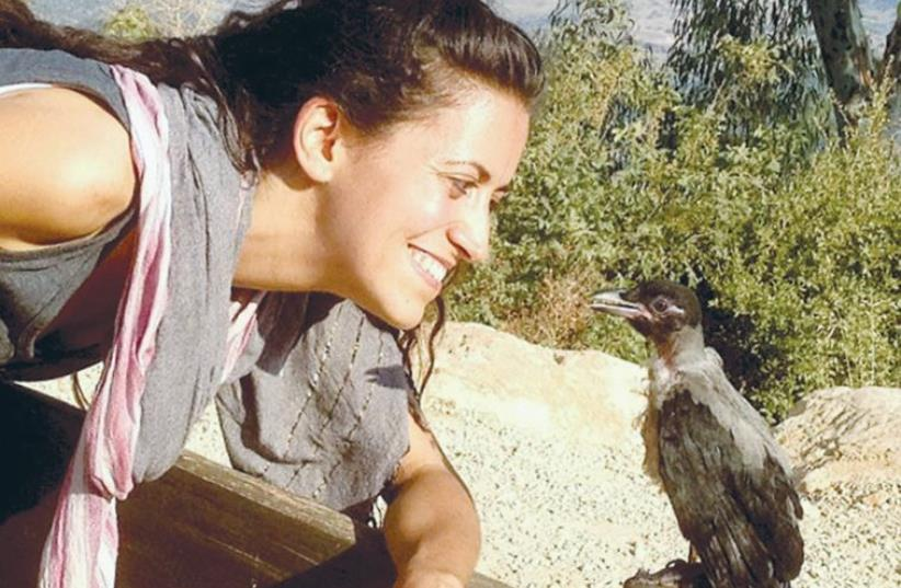 ORIT BARUCH, founder of Ohev Orev, looks at Oscar, the first crow she rehabilitated. (photo credit: ARIK TAL)