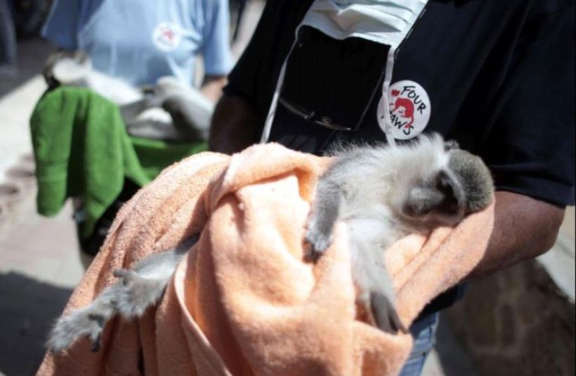 FOUR PAWS actions in Gaza. (photo credit: FOUR PAWS)