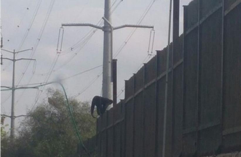 Monkey escapes zoo (photo credit: COURTESY ISRAEL POLICE)