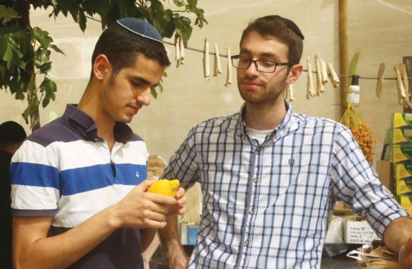 Choosing the right etrog (photo credit: MARC ISRAEL SELLEM)