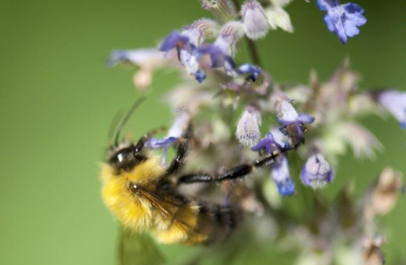 Honeybee (photo credit: ING IMAGE/ASAP)