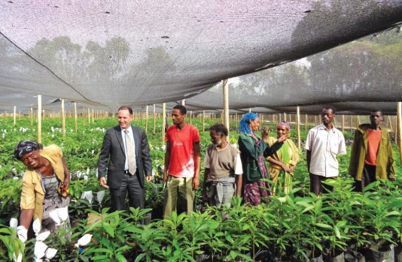 MASHAV head Gil Haskel (second from left) visits a MASHAV nursery for avocado trees in Ethiopia, March 2016 (photo credit: GIL HASKEL)