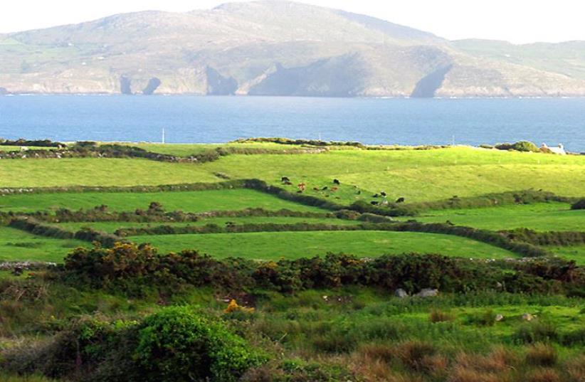 Pasture near Ballyieragh, County Cork, Ireland (photo credit: PAM BROPHY/WIKIMEDIA)