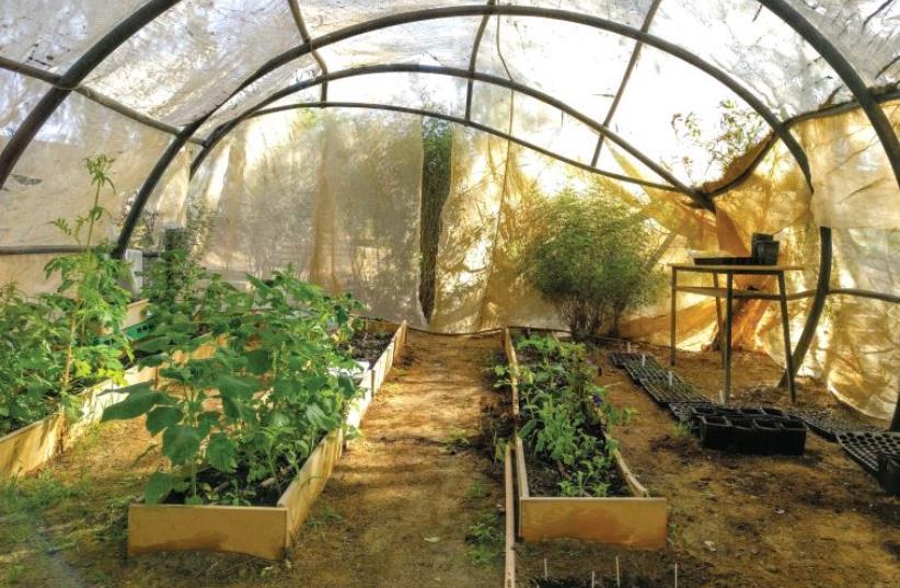 Despite coronavirus chaos, Israelis create gardens of paradise