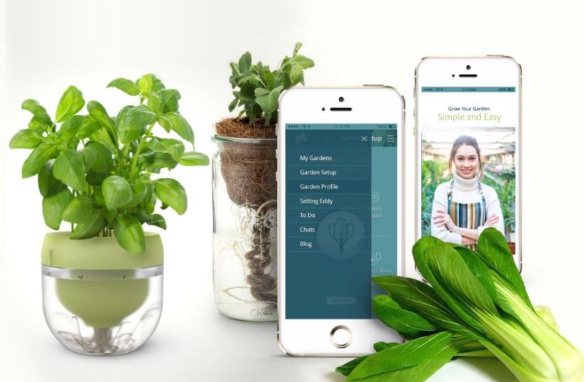 Cultiver de la nourriture toute l'année avec le système hydroponique (photo credit: FLUX)