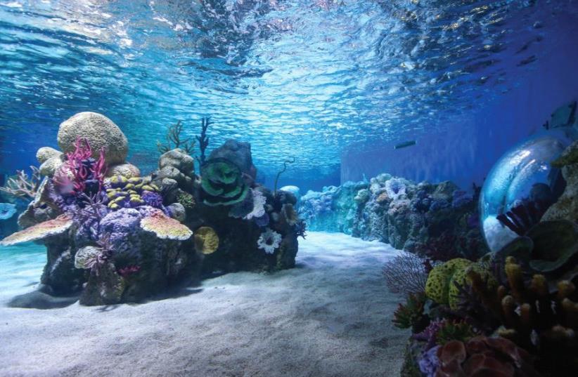 Sea Israel: The Gottesman Aquarium (photo credit: MARC ISRAEL SELLEM)