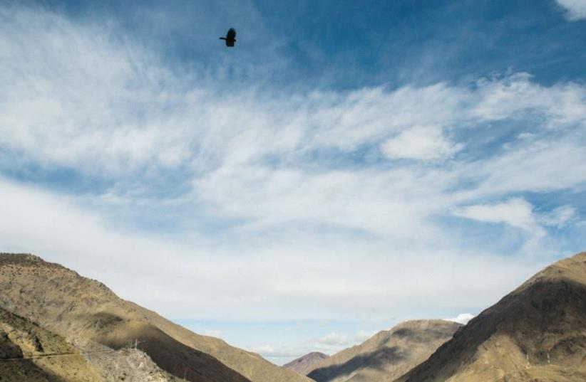 A bird flies over the Atlas Mountains (photo credit: SARAH LEVI)