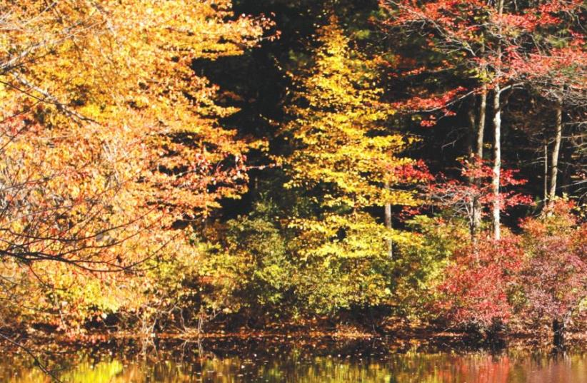 Fall foliage is reflected in the water at Walden Pond in Concord, Massachusetts October 14, 2009 (photo credit: REUTERS)