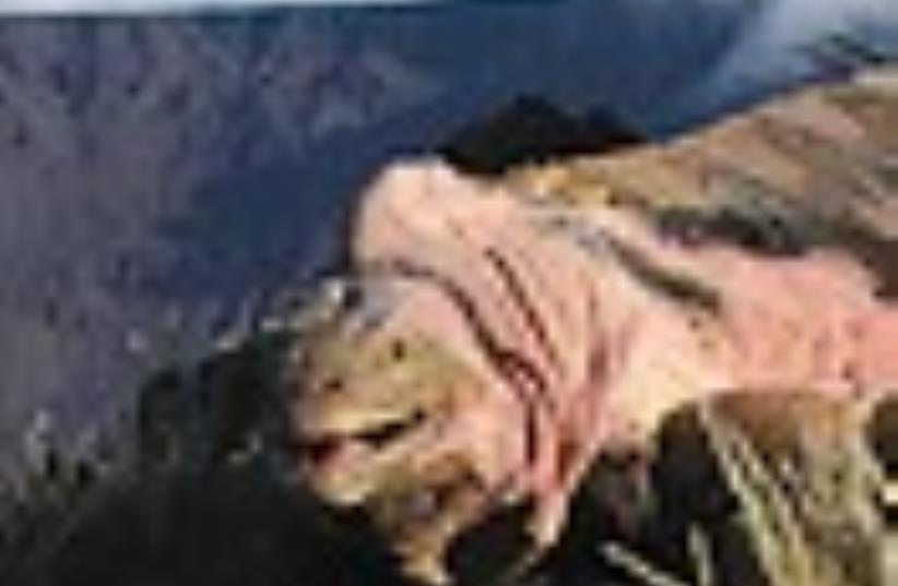 pink iguana (photo credit: Courtesy)