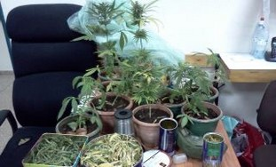 Marijuana seized by the Police. - Photo: Israel Police