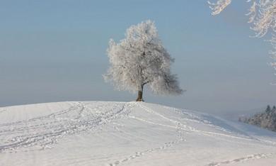 Snow in Zurich  (Larry Brandt)