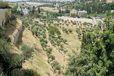 Kidron Valley (BiblePlaces.com)