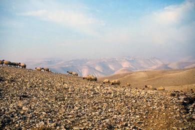 Judean Wilderness (BiblePlaces.com)