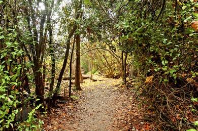 Dan trail (BiblePlaces.com)