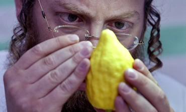 Man inspects etrog