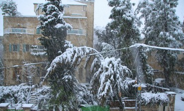 Branch bent over cable in snowy J'lem, Jan 10 2013