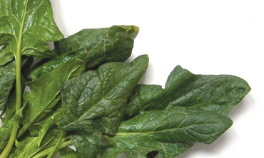 Among the world's healthiest vegetables, spinach comes out at the top-ranking list for nutrient richness (Boaz Lavi)