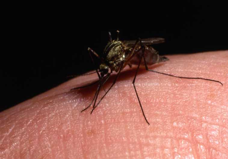WHO's European Region, Health Ministry warn Israel at 'moderate risk' of Zika virus - Business & Innovation - Jerusalem Post