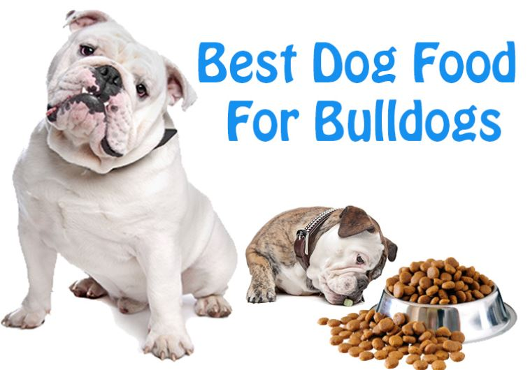 Best Dog Food For American Bulldogs