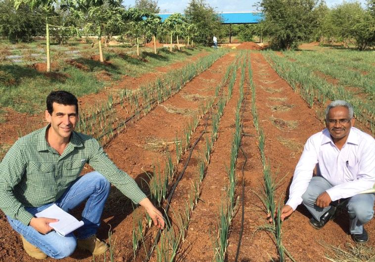 Dan Alluf (left), MASHAV counselor at the Israeli embassy in New Delhi, examines the drip irrigation system in an onion field at the Indo-Israel Agriculture Project Vegetable Center of Excellence in the Dharwad district of Karnataka, India, May 2016