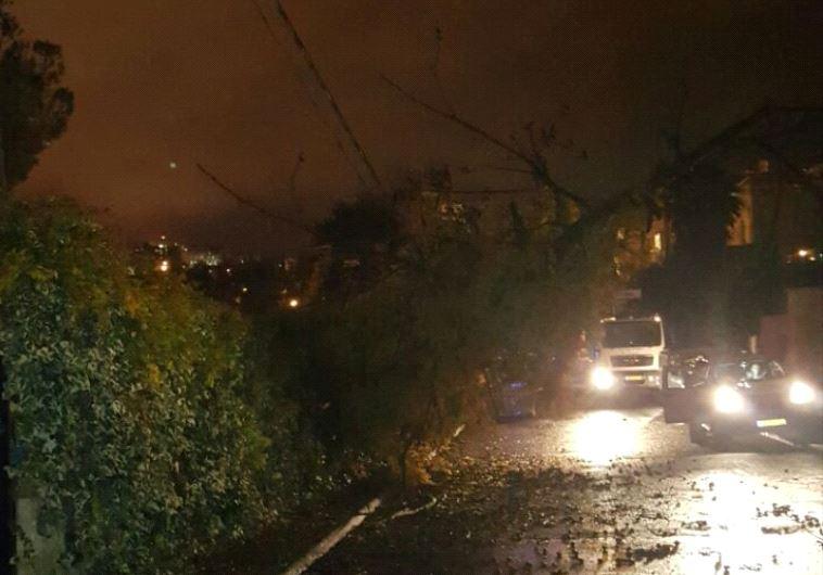 Fallen tree in Jerusalem. Credit: Israel Electric Company.
